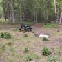 Backyard Bonus