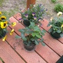 Spring things on the Porch