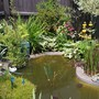 my little pond