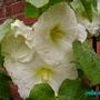 Garden_flowers_002