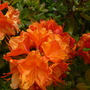 An Orange Delight
