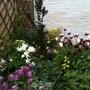 Garden corner in May
