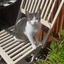 rosie the cat enjoyin the sunshine