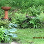 ferns, hosta, JITP, stumpery.
