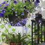 the shade shelf/seat...purple petunias and lobelia
