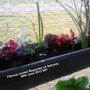 Fibrous_rooted_begonias_on_balcony_26_06_2013_001