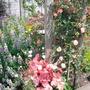 Rosa Niceday (Chewsea)