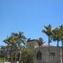 Mostly King Alexander Palms (Archontophoenix alexandre), Kentia Palms (Howea fosteriana) (Archontophoenix alexandre; Howea fosteriana)