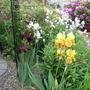 Gold In Autumn - Iris Ger.