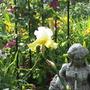 Perfect Interlude (Iris germanica (Orris))