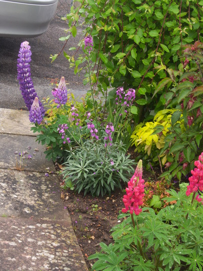Front Garden Border Filling Out now:)