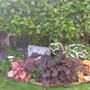 Heucheras & Hostas Under My Camelia Tree