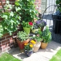 Grape Vine and POTS