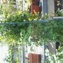 GrahmThomas ready to bloom