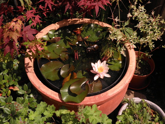 Slightly better shot of the water lily ; )