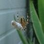Spider_004