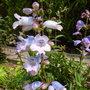 Garden_5ht_july_2013_001