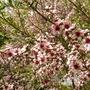 Heligan blossom