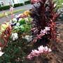 Impressionism manner in the garden!
