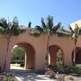 Howea fosteriana - Kentia Palms at Liberty Station, San Diego, CA. (Howea fosteriana - Kentia Palms)