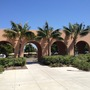 Howea fosteriana - Kentia Palms at Liberty Station, San Diego, CA. (Howea fosteriana - Kentia Palm)