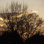 Sunset through the branches.