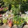 Sunny_lower_garden