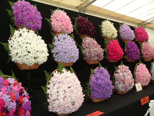 Sweetpea Display