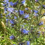 wild flowers scotland