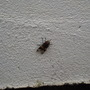 strange insect on garden wall