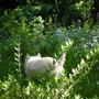 Who's been in my garden?