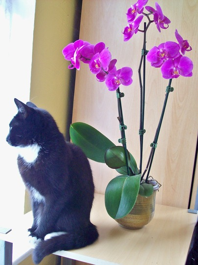 Febe Sitting With My Orchid In Full Bloom