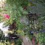 My upside down garden