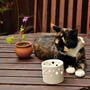 my garden table's arrangements