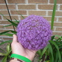 Allium acidoides