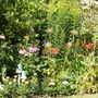 Garden_054