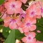 Garden_059
