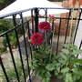 Garden_037