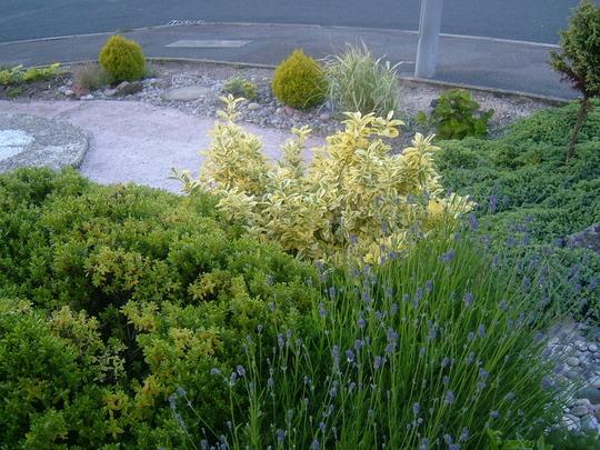 low maintainance garden