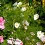 An Homegrown Jumble From Seeds
