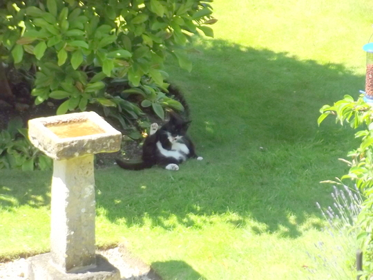 Willow keeping in the shade, very hot day!