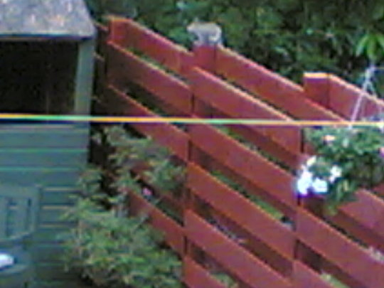 a squirill on top of fence