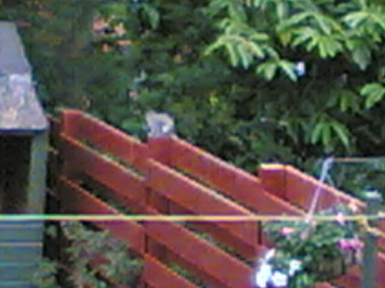 squirill no 2 on fence