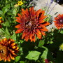 August_2013_007