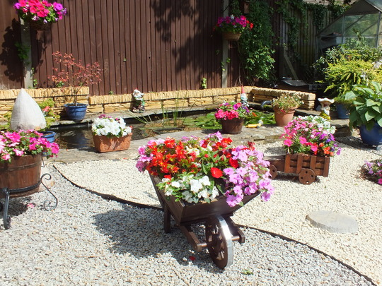 My colourful pots and planters