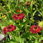 Lilies_cyclamen_butterfly_delphinium_014