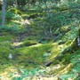 mossy glen near my parents' cabin