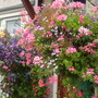 lucys hanging baskets