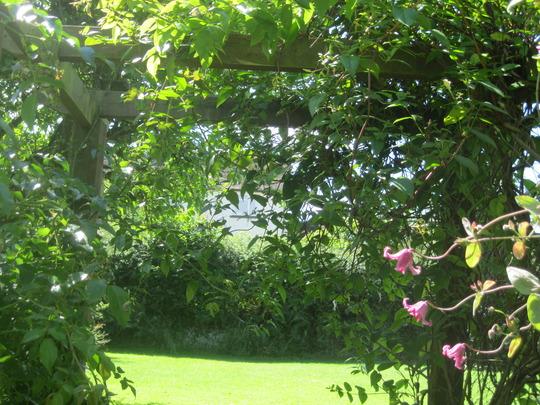 Looking through the garden arch.