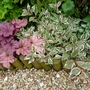 Heuchera 'Berry Smoothie' and Weigela Florida 'Monet' (Weigela florida (Weigela))
